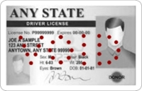 Sample Driver's License with VOID Perforation holes